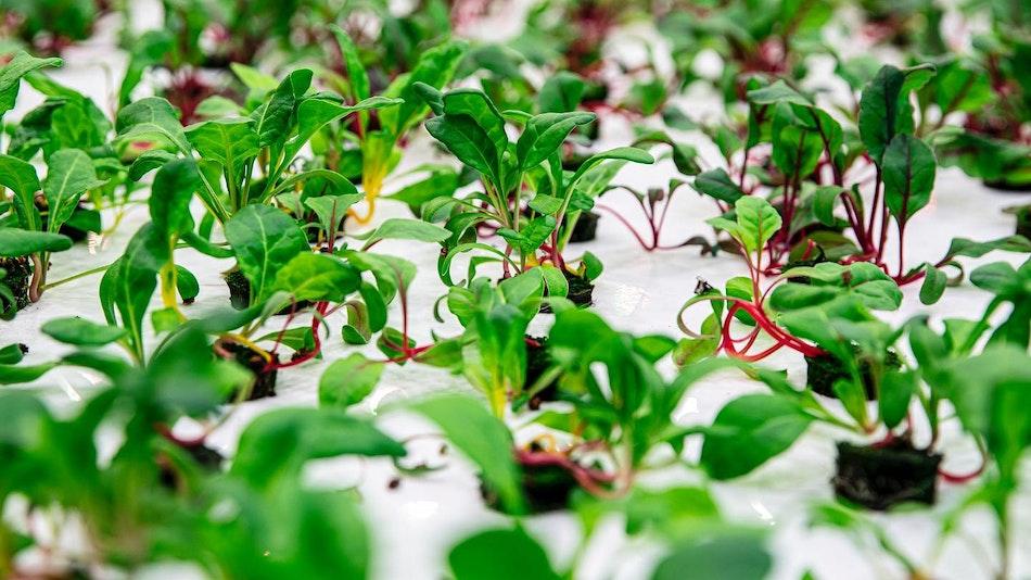 vaxa farm produce, vertical farming
