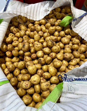 Bag of ugly potatoes