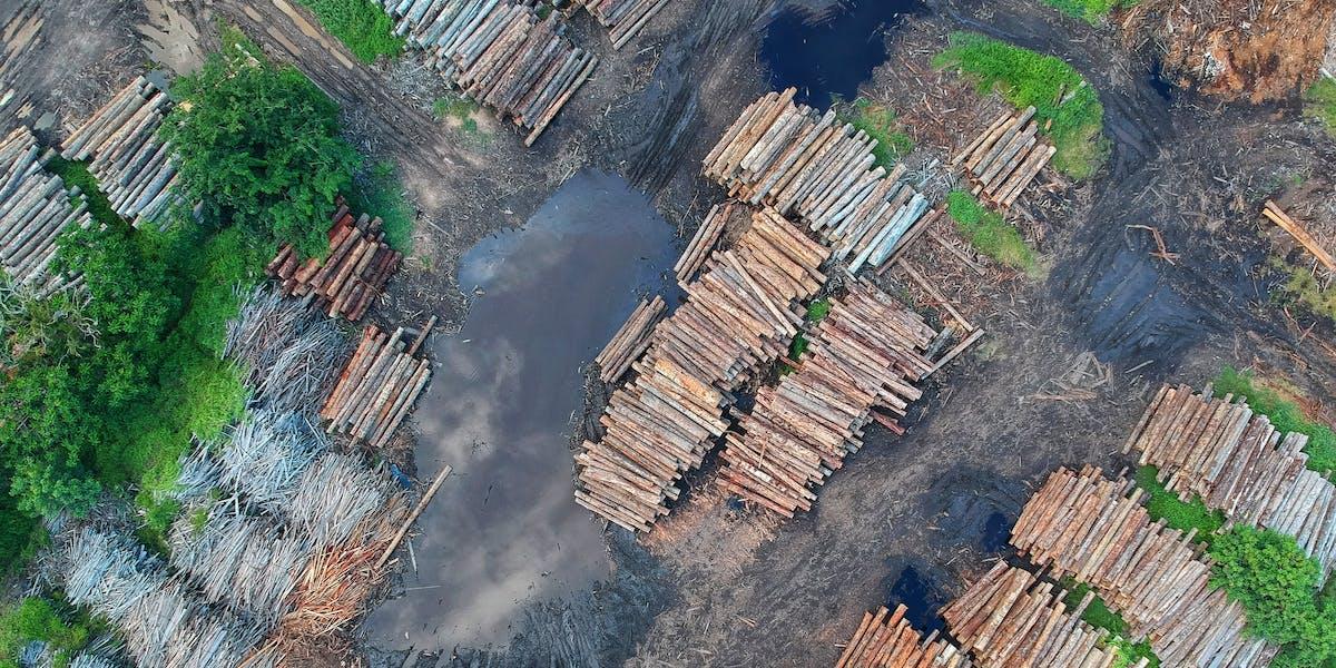 Deforestation woodpiles