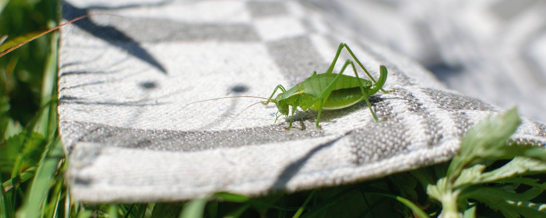 Green cricket on a rug