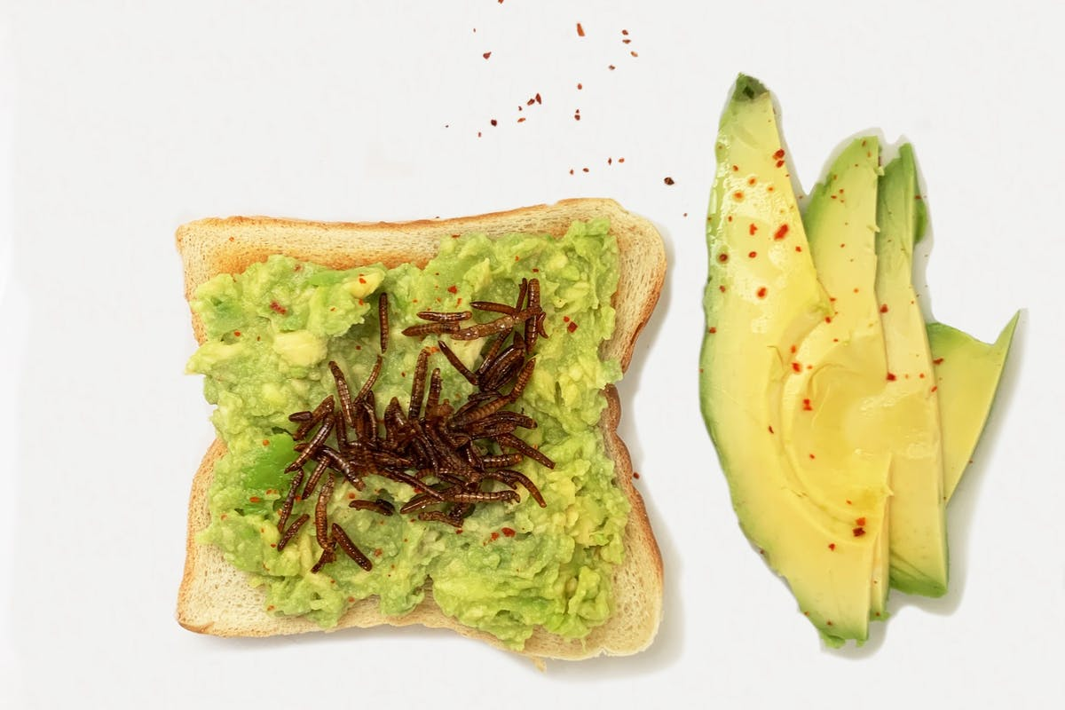 Avo toast toppped with mealworms with some slices of avo on the side