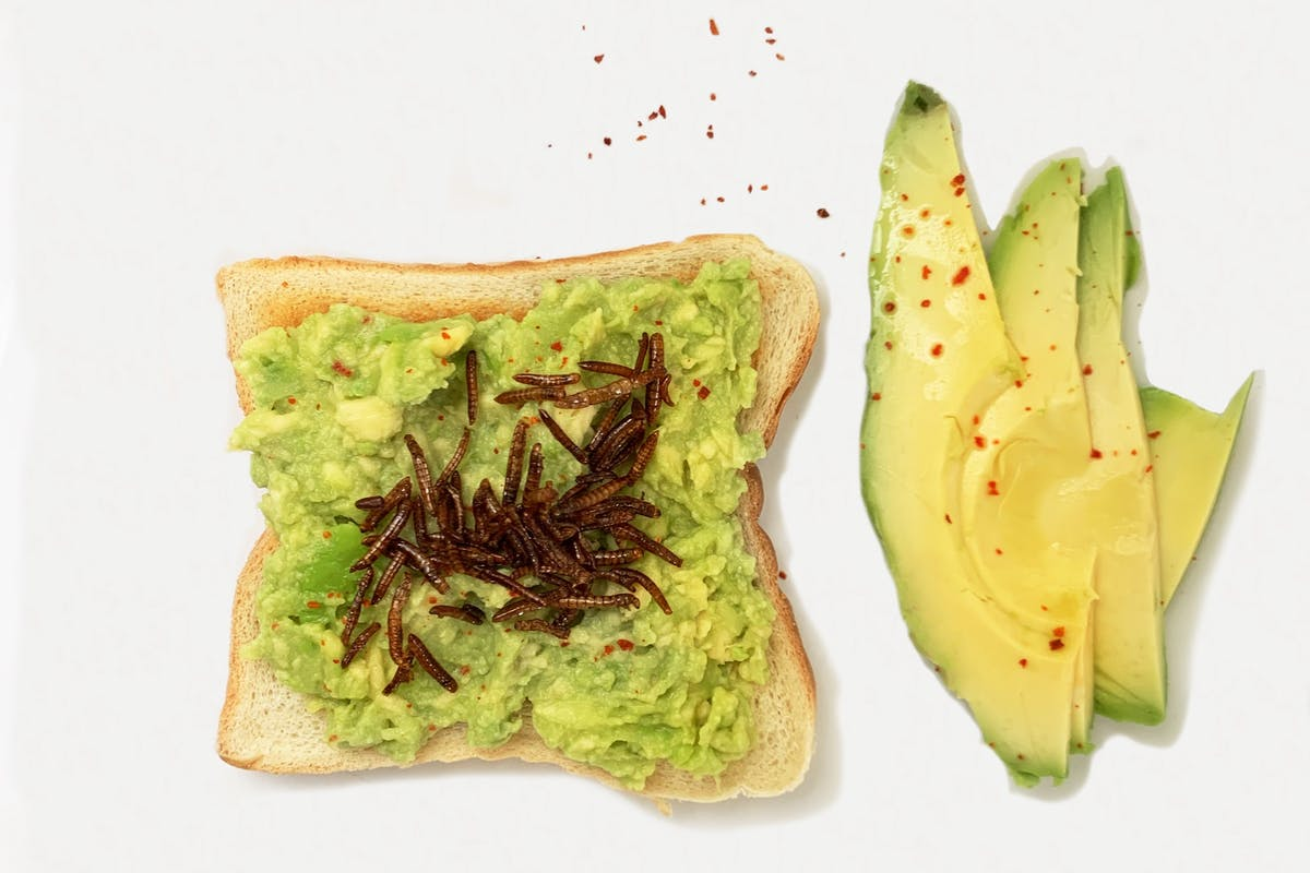 Avo toast toppped with mealworms