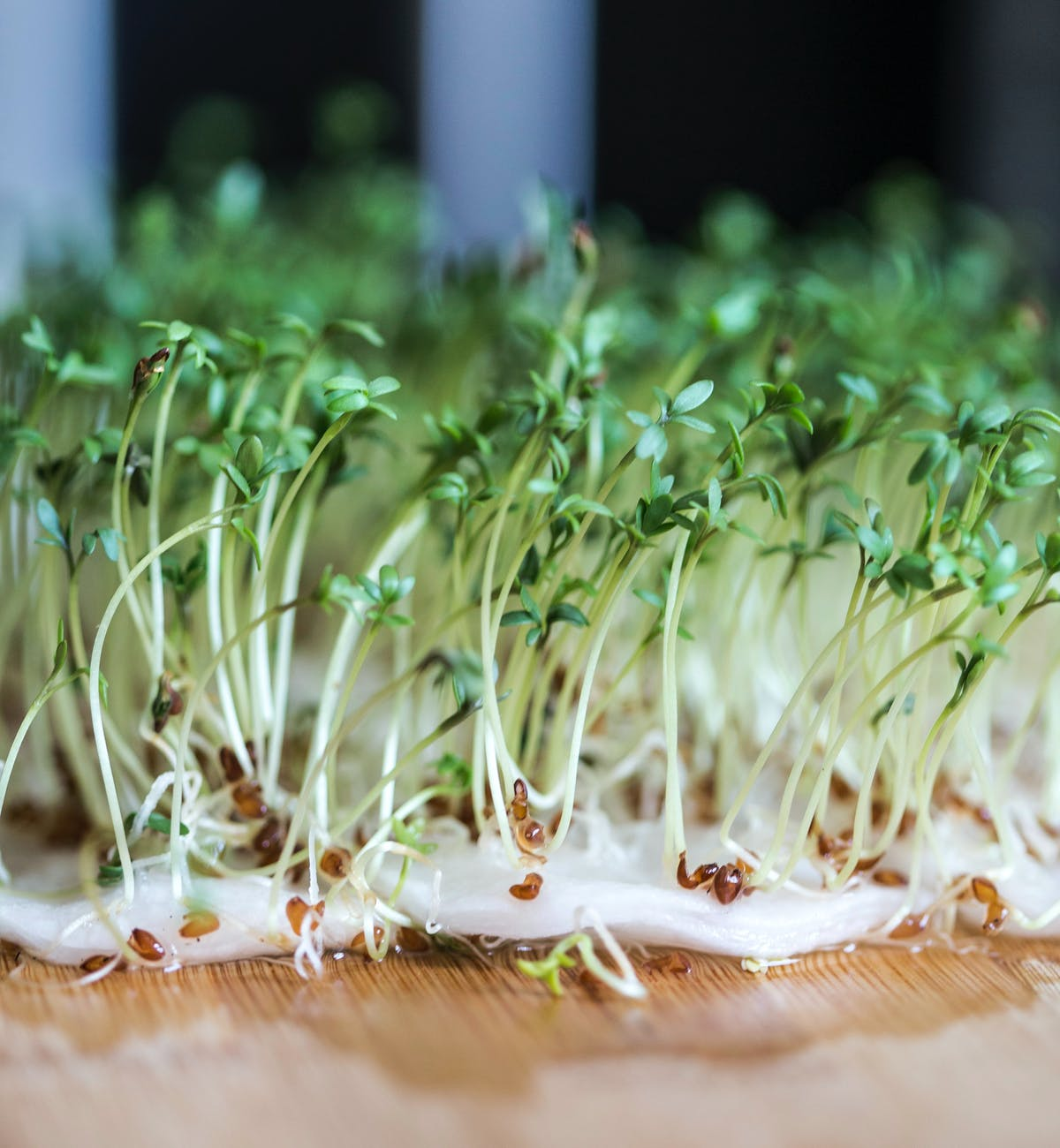 Water Cress Plant