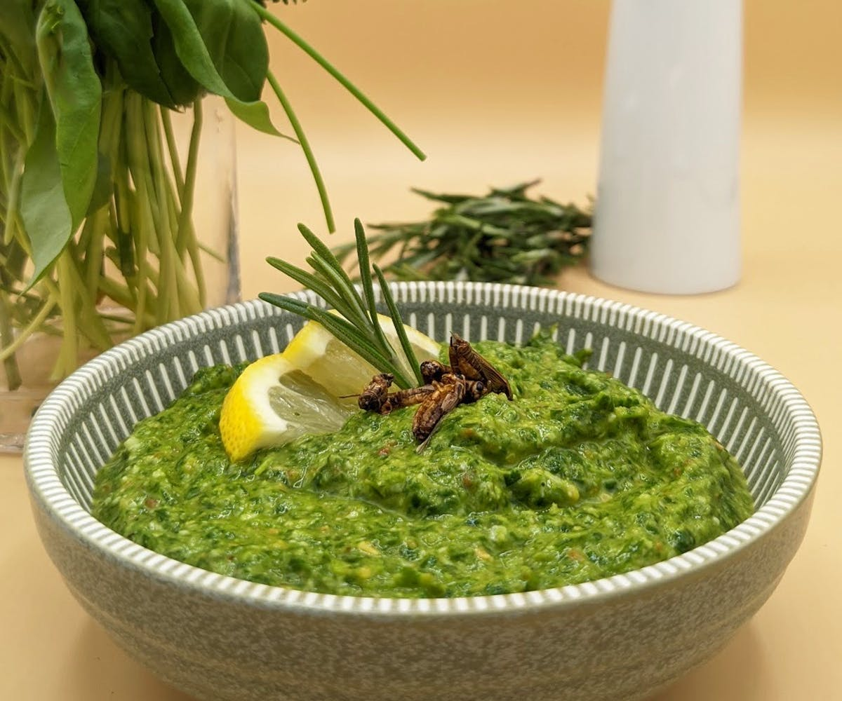 Cricket Pesto in a bowl with herbs in the background