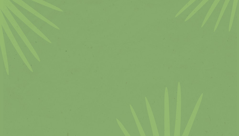 Light green background image of palms.