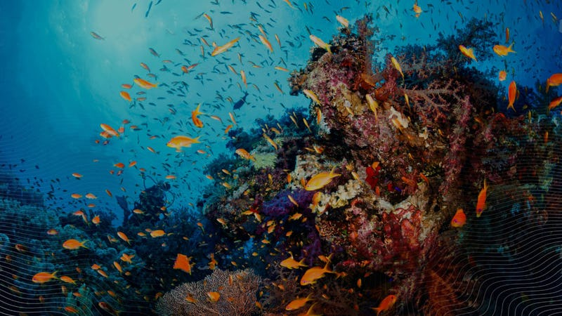 Fish swimming around a coral reef.