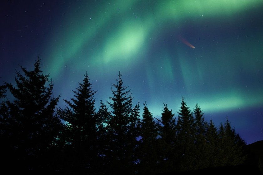 Aurora in the forest. Photo by Chris Henry on Unsplash