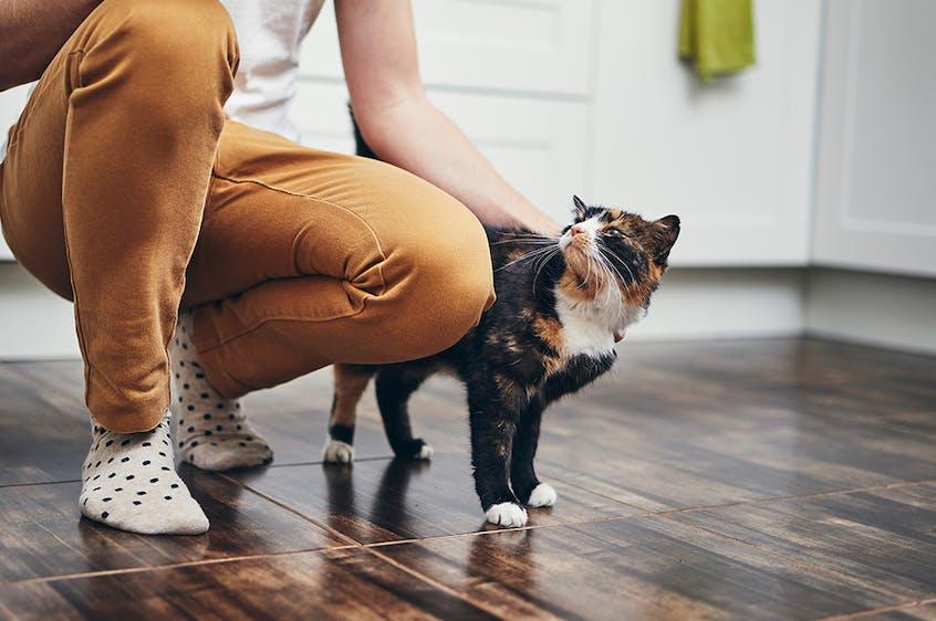 hepster Tierversicherungen