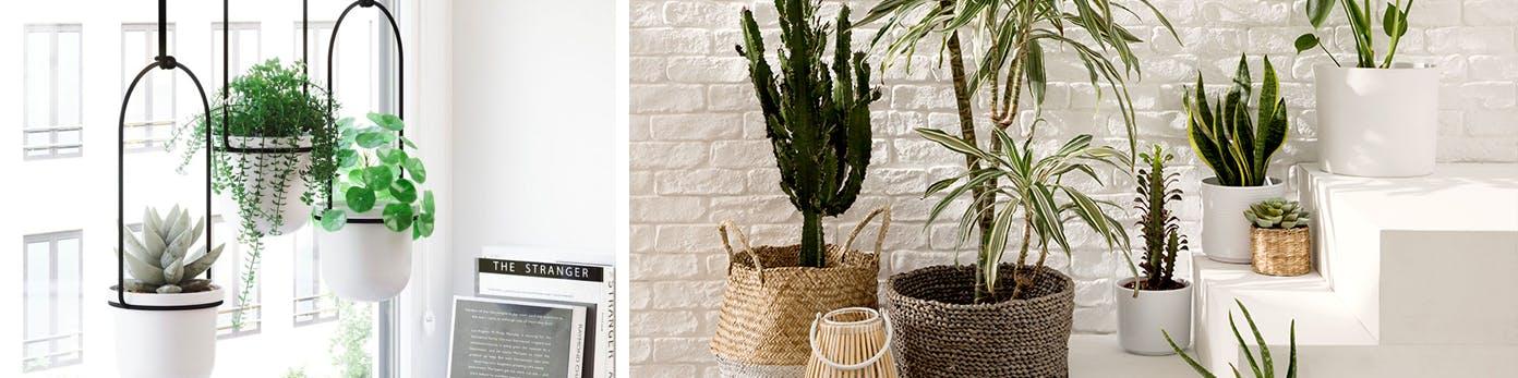 Weiße Pflanzentöpfe vor Fenster hängend sowie verschieden große Töpfe aus Beton und Bast auf Treppe arrangiert