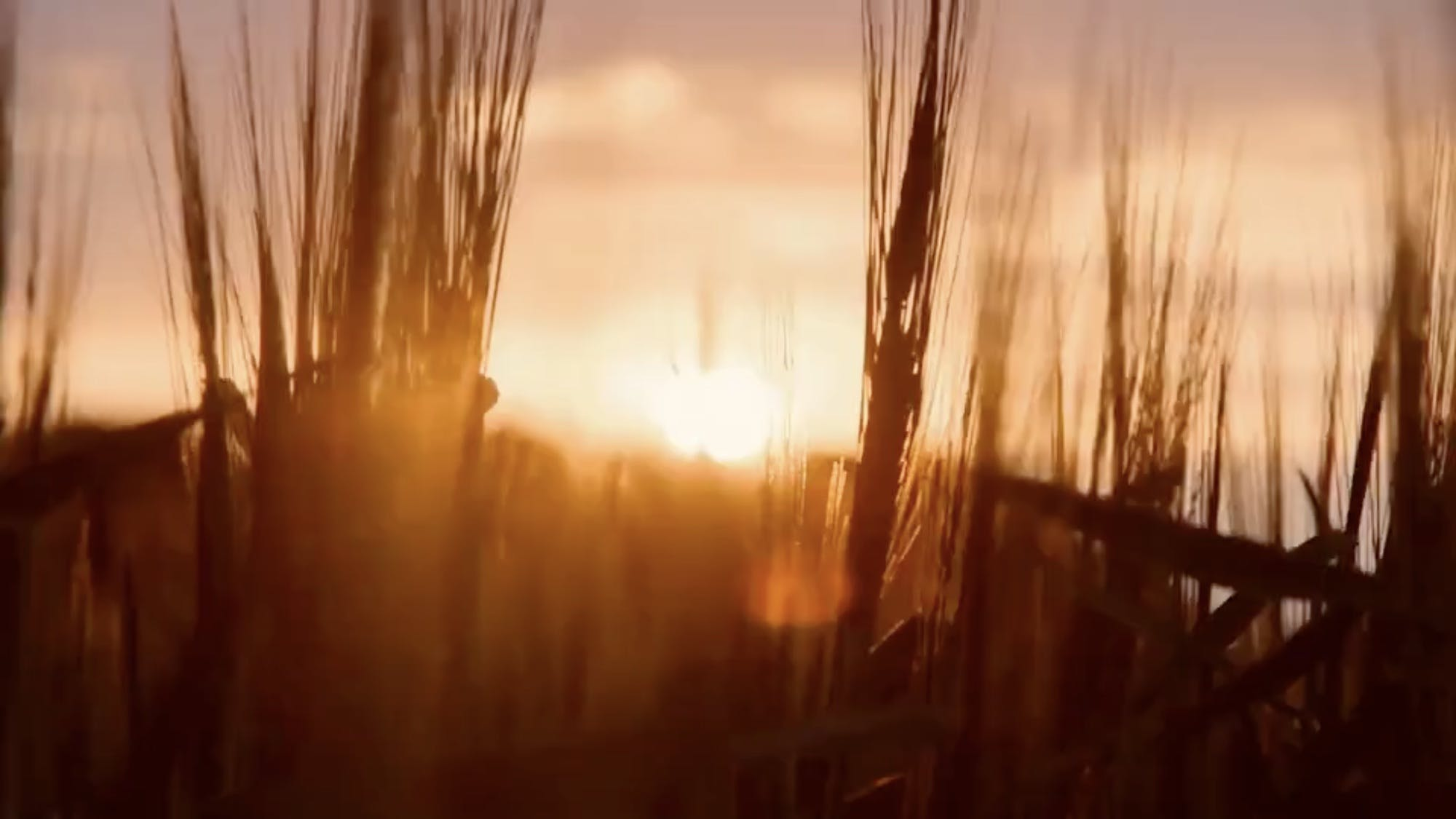 A sunrise overlooking a field of wheat