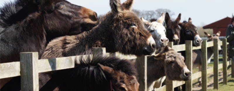 Redwings Horse Sanctuary, near Great Yarmouth