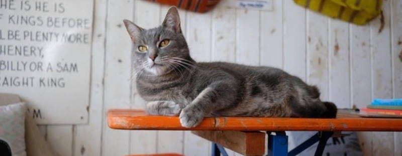 Darling Darlings Cat Lounge Great Yarmouth