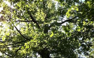 Se relier à l'énergie des arbres