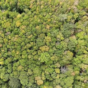 forêt de Breitenbach attenante au landscape høtel 48°Nord, vue de haut