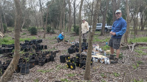 volunteer marking and preparing tree seedlings for Coolgreen Corridor
