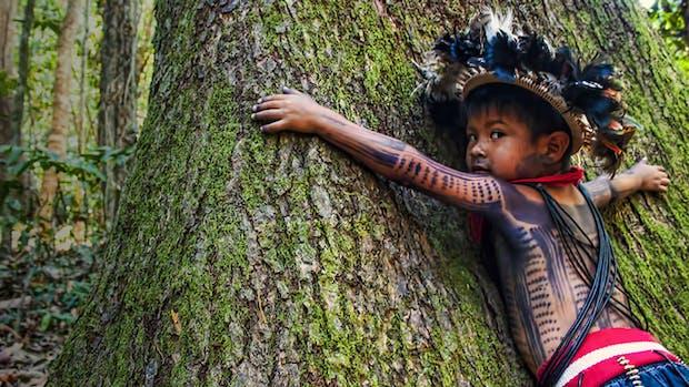 Helping halt deforestation with AI