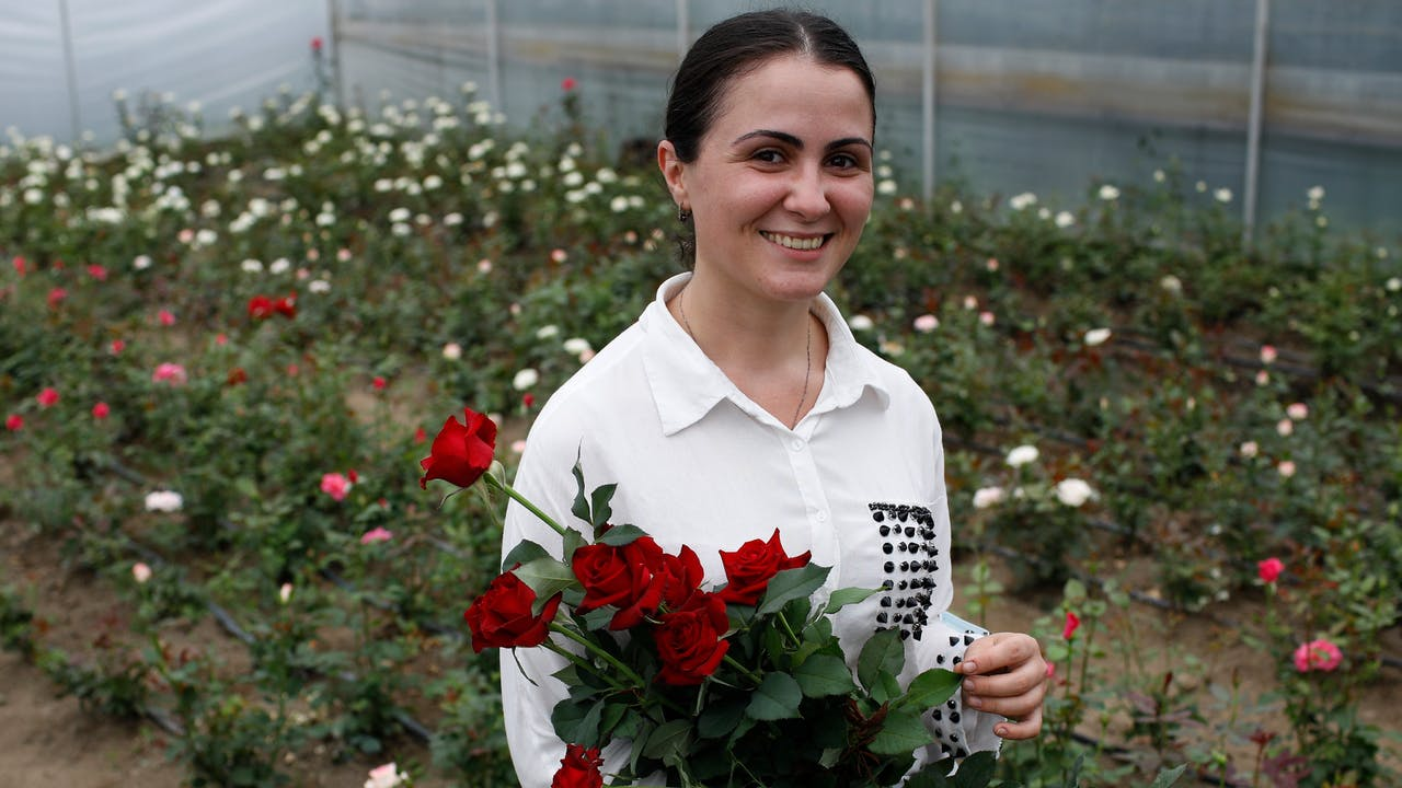 Mariam Kobalia stands in her greenhouse and carries a bouquet of red roses. Behind her are rows of rose bushes.