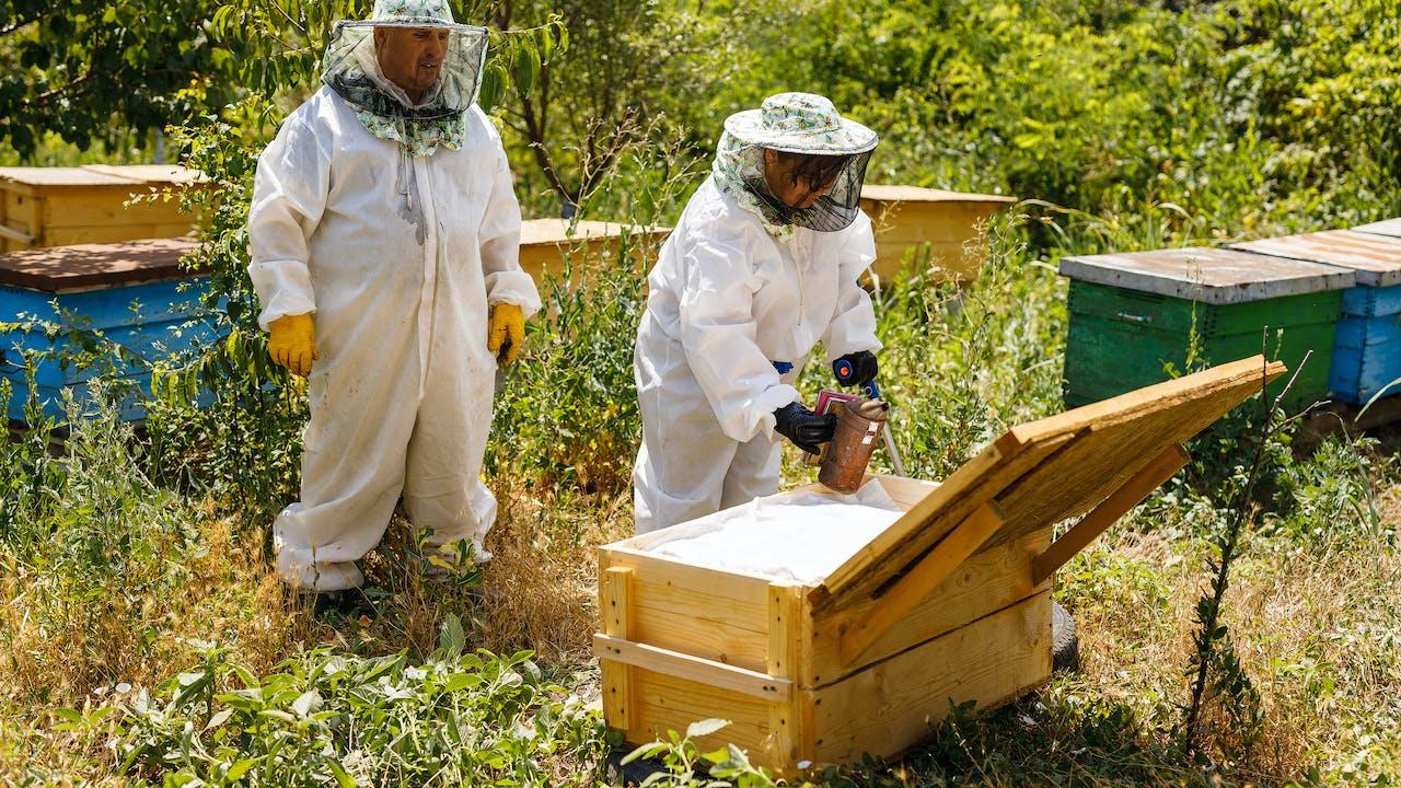 Viorica Anghel utiliza un fumador para calmar a las abejas productoras de miel en presencia de su instructor, Sergiu Paslaru.