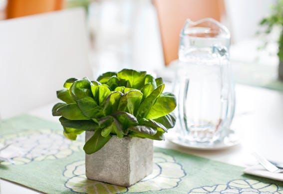 mesa decorada com vaso de manjericão