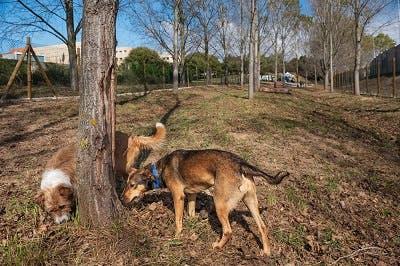 Parque Canino da Seara