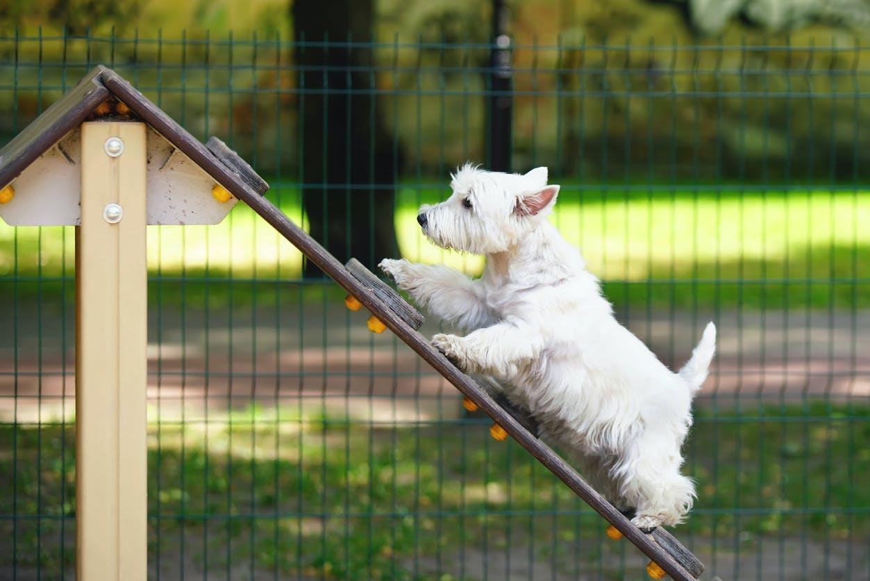 5 parques para passear o seu cão no Porto