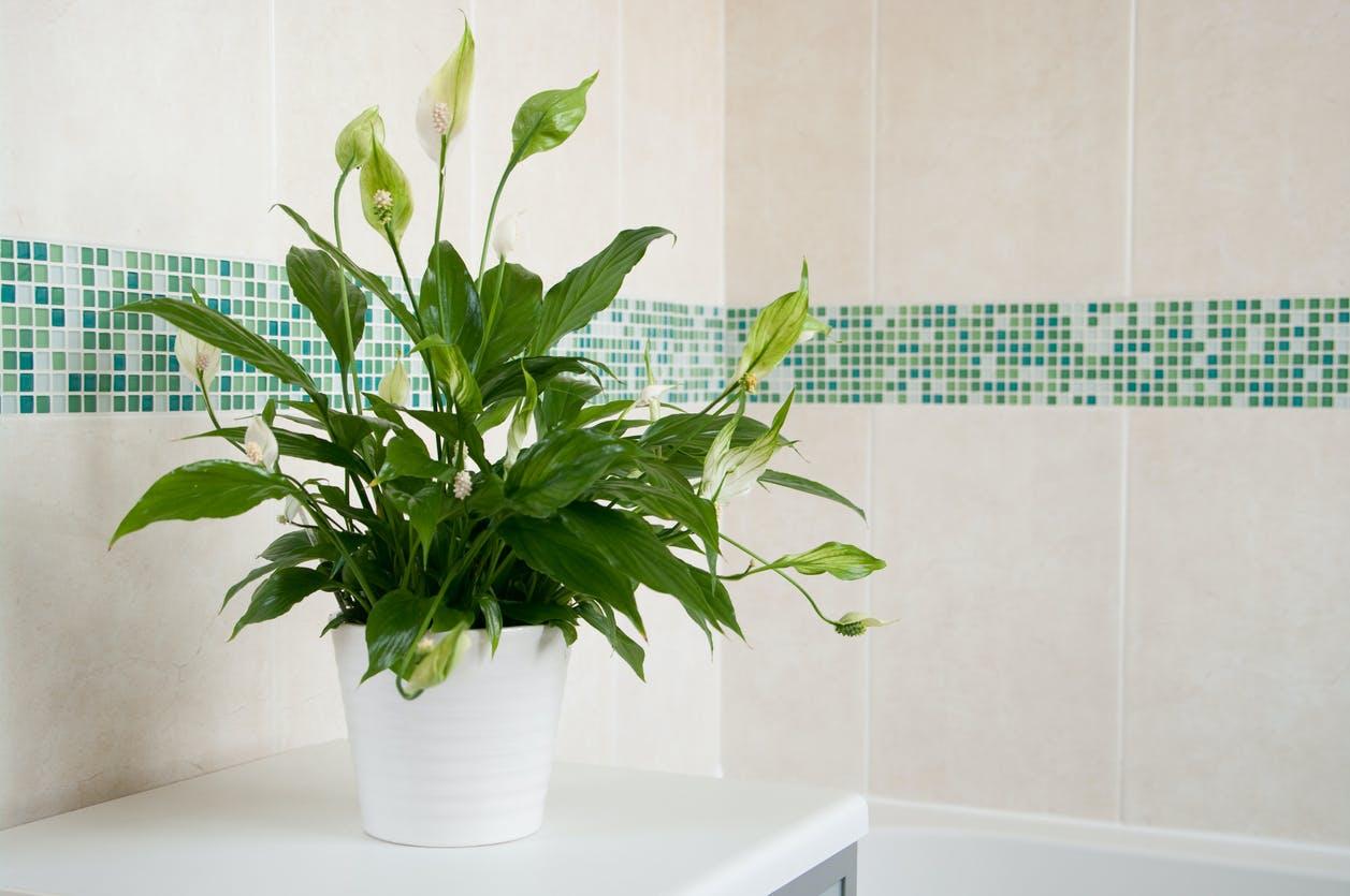 7 plantas para ter em casa e que diminuem humidade