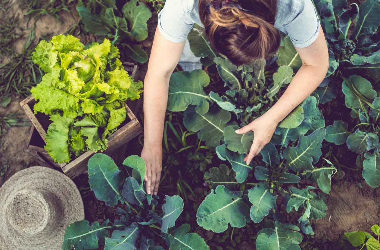 Conheça o calendário para plantar e organizar o seu jardim [janeiro a junho]