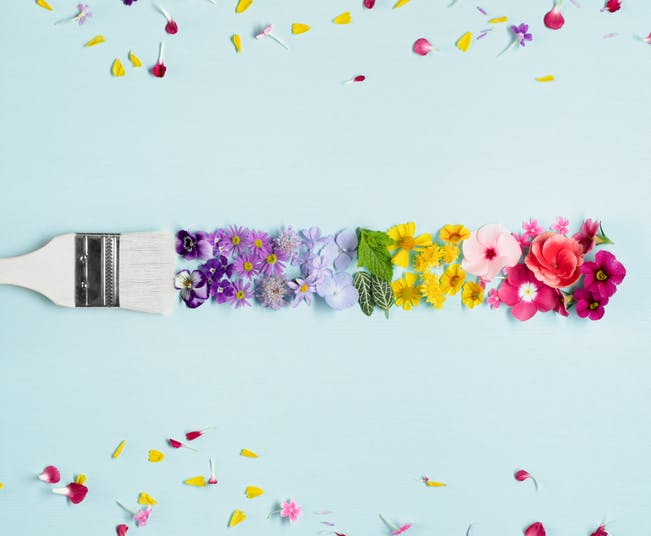 flores coloridas primavera
