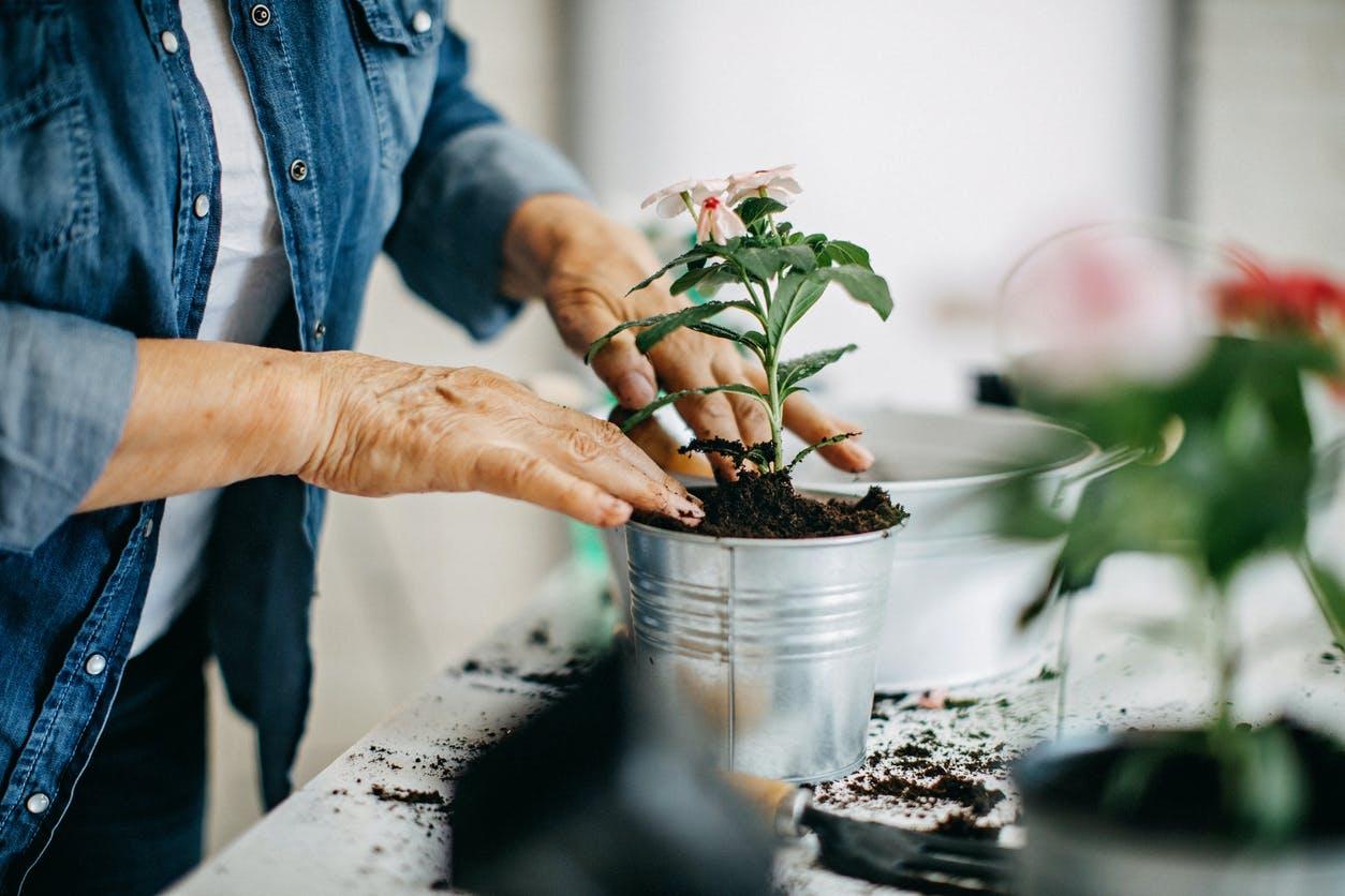 6 dicas para trabalhar as suas plantas ou jardim