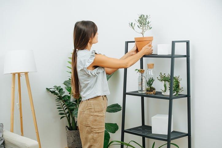 Plantas repelentes de insetos