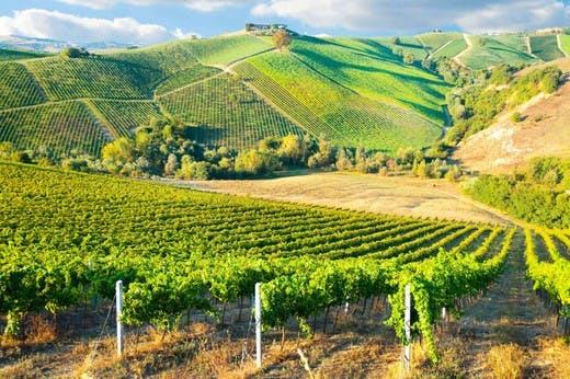 Vineyard on the Bordeaux Road Trip