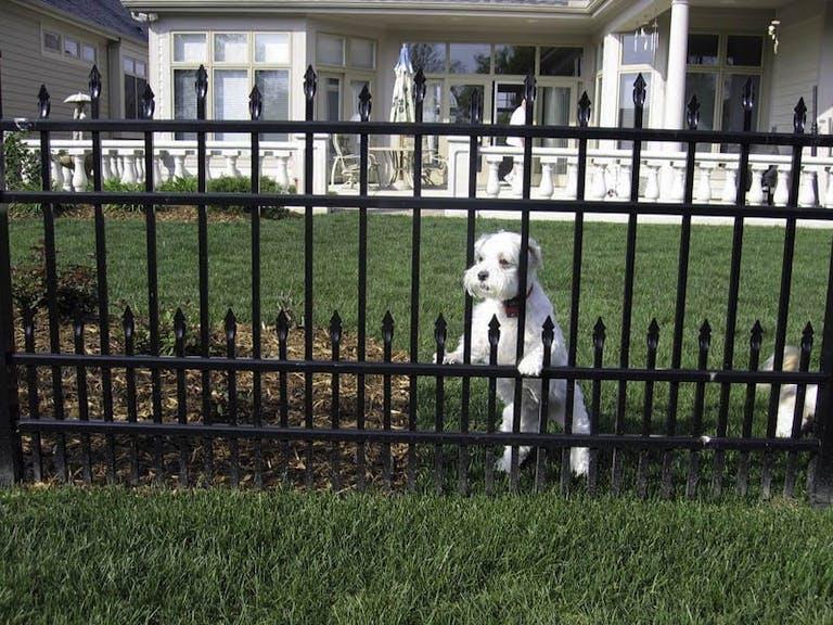 Cedar Grove Fence Iron Fence