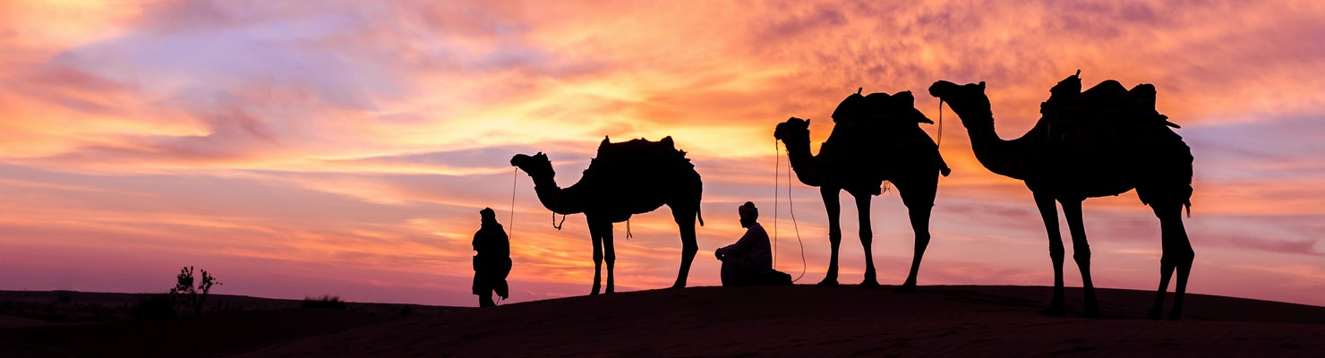 Three camels against a pink night sky