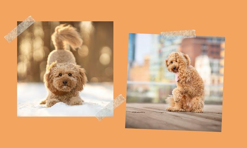 Hundetricks lernen: Welches Zubehör für dein Tricktraining?