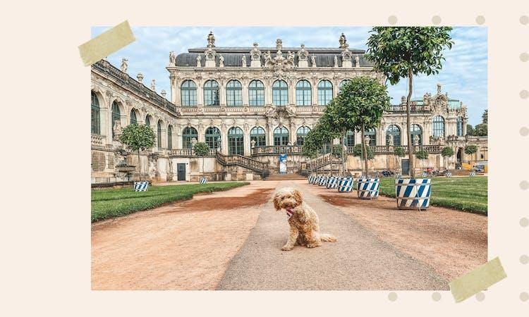 Der Hundeblog über Urlaub mit Hund
