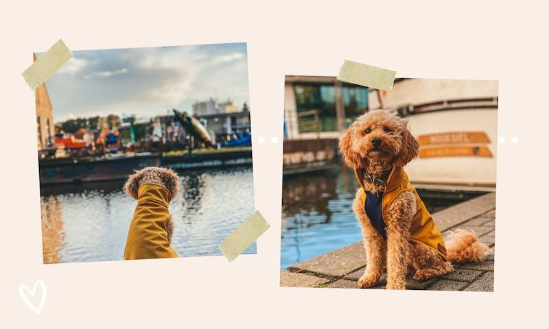 Urlaub mit Hund in Aurich