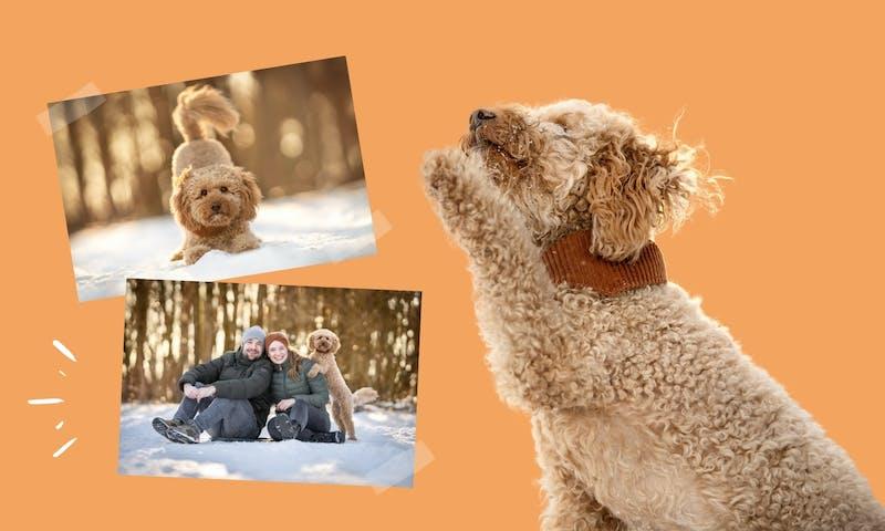 Einfache Hundetricks lernen: Einführung ins Trickdogging