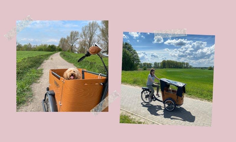 Lastenfahrrad für Hunde: Das Babboe E-Go im Test