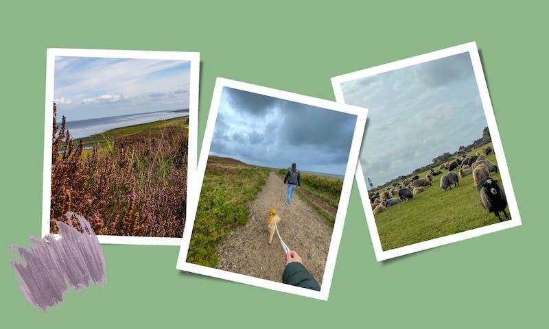 Wandern mit Hund durch die Sylter Braderuper Heide