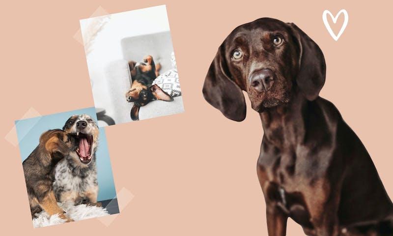 Valentinstag: 14 süße Hunde zum Verlieben