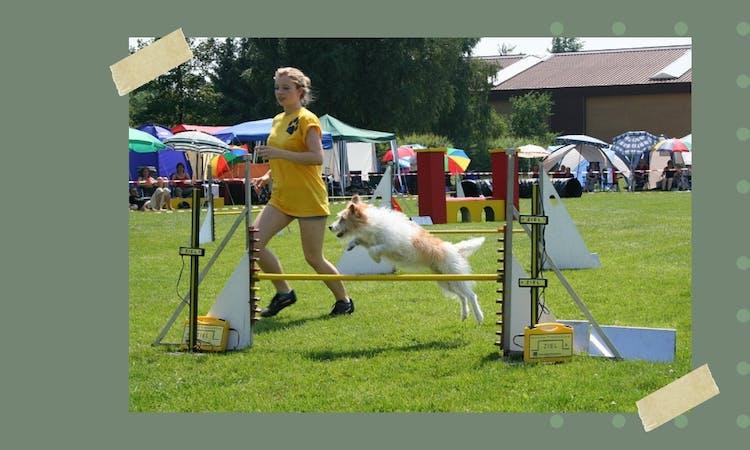 Der Hundeblog über Hundesport