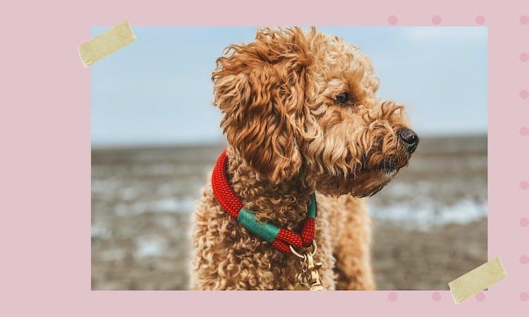 Der Hundeblog über Hundezubehör und Lifestyle-Produkte