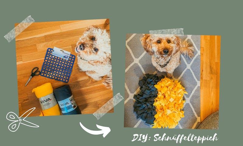 DIY Schnüffelteppich