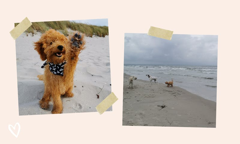 Urlaub auf Rügen mit Hund