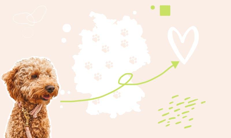 10 schöne Regionen in Deutschland mit Hund