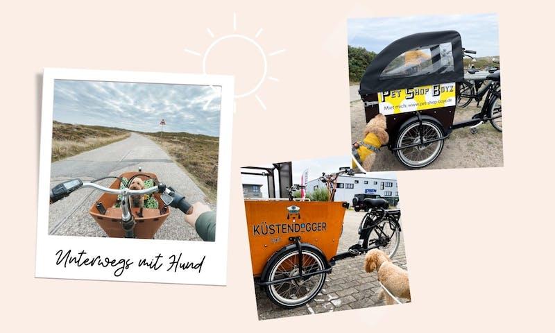 Urlaub mit Hund: Lastenrad mieten auf Sylt
