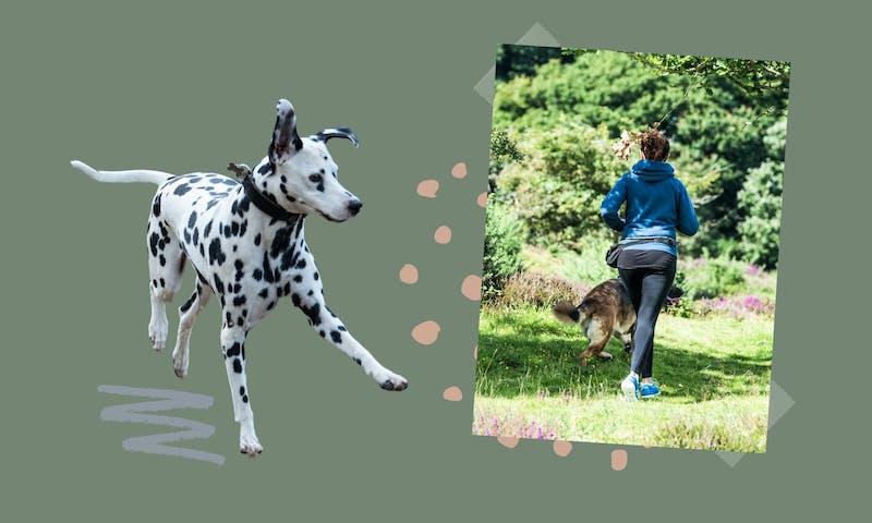 Dalmatiner: Joggen mit Hund