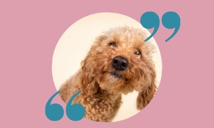 Der Hundeblog mit spannenden Experten-Interviews