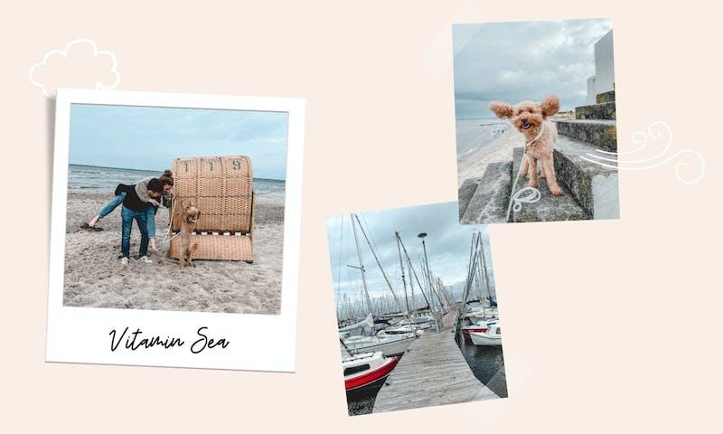 Urlaub mit Hund in Heiligenhafen