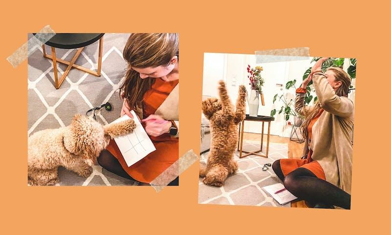 Trickanleitung: Tic Tac Toe mit Hund spielen